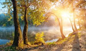 Картинка Времена года Осень Речка Рассветы и закаты Ствол дерева Природа