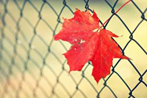 Картинка Осенние Вблизи Листья Ограда Природа