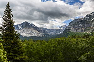 Фотографии США Парки Гора Леса Ели Облачно Glacier Природа