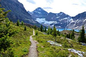 Фото Канада Парки Гора Озеро Пейзаж Тропинка Ели Mount Revelstoke Природа
