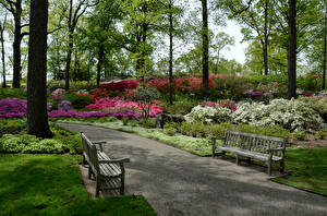 Обои США Сады Нью-Йорк Газон Скамейка Belmont Природа