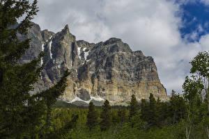 Фотография США Парк Горы Ели Glacier Природа