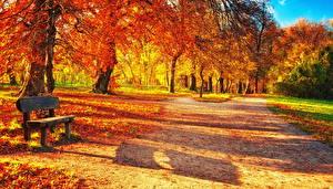 Картинка Сезон года Осень Парки Листья Скамейка Природа
