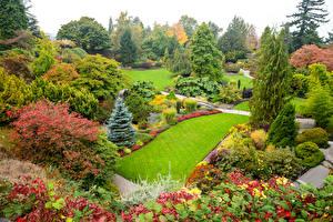 Обои Канада Сады Пейзаж Ванкувер Газон Ель Кусты Queen Elizabeth Park Природа