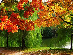 Картинка Россия Парки Времена года Осень Реки Дерево Листва Царицыно Природа
