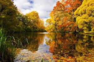 Картинки Россия Санкт-Петербург Времена года Осень Парки Речка Деревья Природа