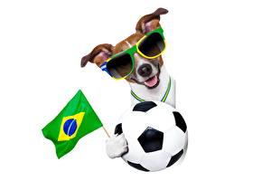 Фотография Футбол Собаки Бразилия Мячик Флаг Очков Джек-рассел-терьер Забавные FIFA, World Cup, 2014 спортивные Животные
