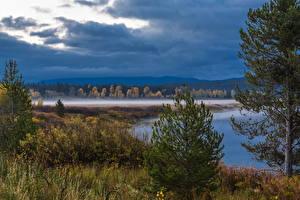 Фотография Америка Парки Озеро Небо Ели Grand Teton Wyoming Природа