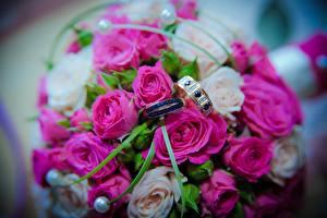 Фотографии Праздники Букет Розы Кольца цветок