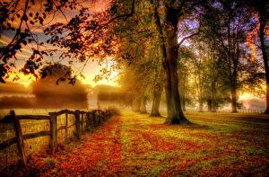 Фотография Времена года Осенние Рассветы и закаты Деревья Листва Ограда Природа