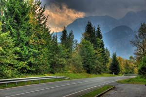 Фотография Австрия Дороги Горы Зальцбург Ель Природа