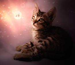 Фотография Кот Рисованные Бабочки Котята животное