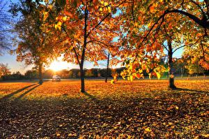 Фотографии Сезон года Осень Рассветы и закаты Деревья Листва Природа