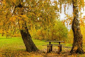 Обои Сезон года Осень Парки Деревьев Листва Скамья Березы Природа