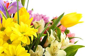 Обои Тюльпаны Цветы
