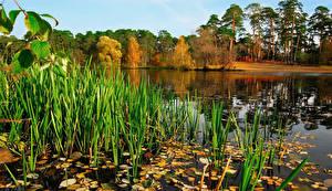 Картинки Россия Речка Парки Осень Подмосковье Природа