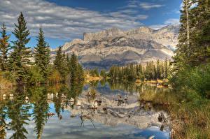 Картинки Канада Парки Гора Озеро Ели Alberta Природа