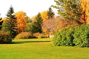 Картинки Времена года Осень Парки Траве Ель Кустов Природа