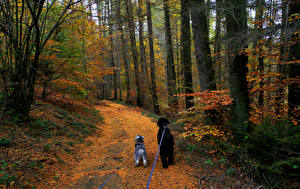 Обои для рабочего стола Сезон года Осень Лес Собака Дерево Тропинка Два Природа