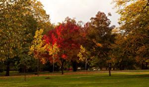 Фотографии Англия Парки Сезон года Осень Лондон Деревья Газон Природа