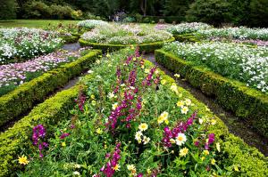 Фото Шотландия Сады Наперстянка Ромашки Кустов Dunvegan Castle   Gardens Природа