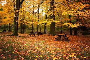 Фотография Времена года Осень Парки Скамья Листья Природа
