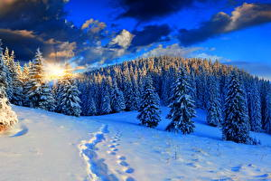 Картинки Пейзаж Сезон года Зимние Леса Небо Рассветы и закаты Снег Ель Природа
