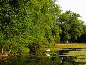 Фото Англия Парки Пруд Лондон Деревьев Природа