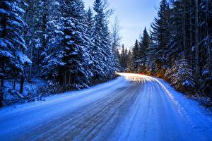 Фотография Сезон года Зима Дороги Ель Снег Природа