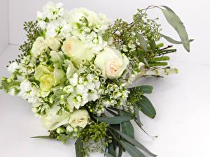 Обои Букет Роза Морозник Белый Белый фон