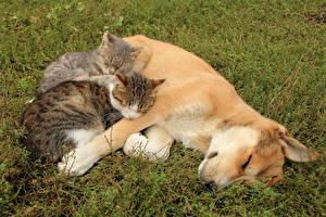 Фото Собака Кошки Щенок Сон Трава Животные