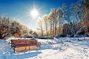 Фото Сезон года Зимние Парк Снегу Дерево Скамья Солнце Природа
