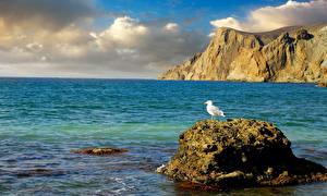 Обои Россия Море Чайка Камни Крым Природа фото