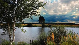 Картинка Россия Река Пейзаж Береза Подмосковье Природа