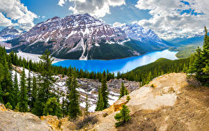 Картинка Пейзаж Канада Парки Озеро Гора Банф Ели Облака Peyto Lake Природа