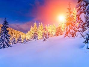 Фотографии Времена года Зима Рассветы и закаты Пейзаж Снег Ель Природа