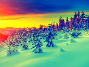 Картинки Времена года Зима Рассветы и закаты Пейзаж Снег Ель Природа