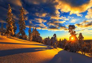 Картинки Времена года Зимние Рассветы и закаты Пейзаж Снег Ель Облака Природа