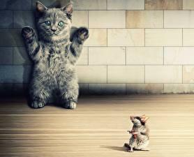 Обои Кошки Животные