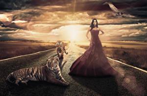 Фотографии Дороги Небо Рассветы и закаты Большие кошки Тигры Брюнеток Платья Облака девушка Животные Природа Фэнтези