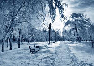 Фотография Сезон года Зима Пейзаж Парки Деревья Снеге Уличные фонари Природа