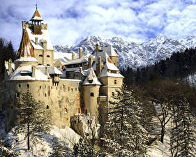 Обои Румыния Замки Горы Зима Снега Ели Bran Castle Transylvania город