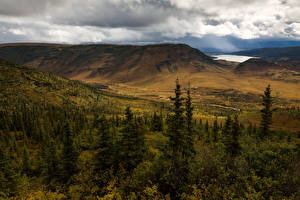Фотографии Америка Парк Пейзаж Горы Аляска Ели Denali Природа