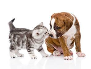 Обои Собаки Кошка Котята Щенков Амстафф Животные