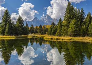 Фото Америка Парки Озеро Воде Ели Облачно Grand Teton Природа