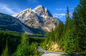 Картинка Канада Парк Гора Пейзаж Леса Дороги HDRI Yoho Природа