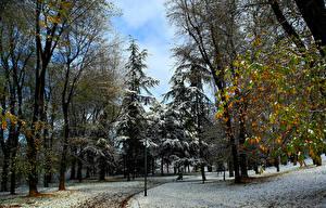 Обои Времена года Зимние Парки Деревьев Природа