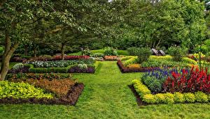 Фото США Сады Газон Кустов Траве Longwood Kennett Square Природа