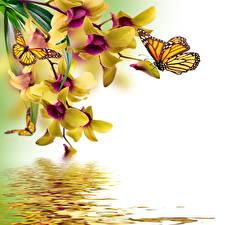 Фотография Бабочка Орхидея Рисованные Животные