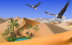 Фото Птица Рисованные Пустыня Ястреб Белоголовый орлан Песке животное Природа
